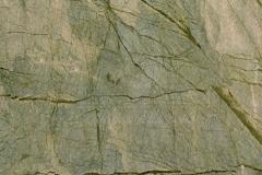 tasmanian-green